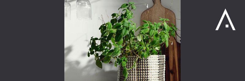 Planters & pots Nordal